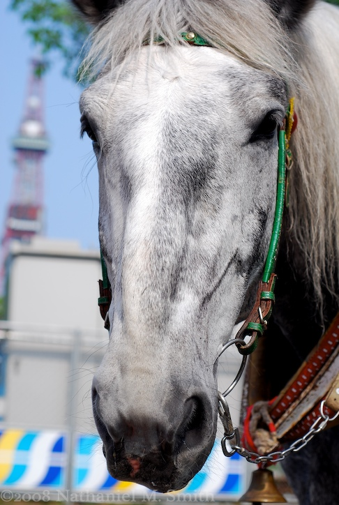 long faced Kinta and Sapporo tower